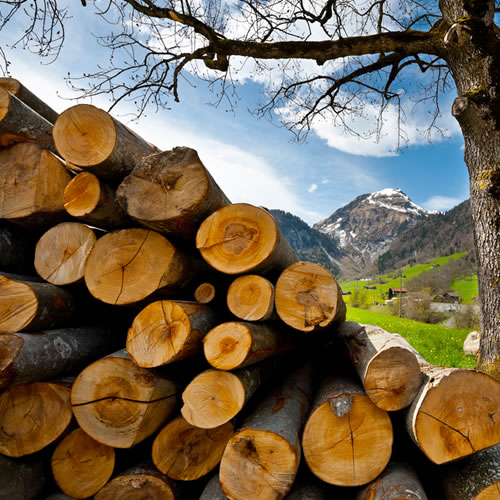 Types of Firewood Logs